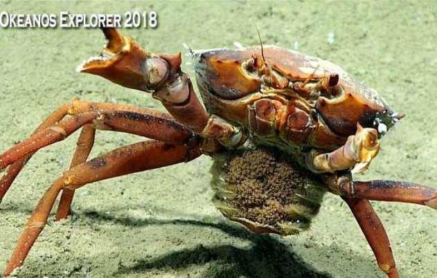موجودات عجیب در عمق ۱۵۰۰ متری دریا+تصاویر
