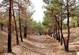 باشگاه خبرنگاران -نابودی درختان در پارک جنگلی چیتگر + فیلم