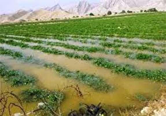 باشگاه خبرنگاران -خسارت سرما به 257 هزار هکتار از باغات و مزارع استان زنجان