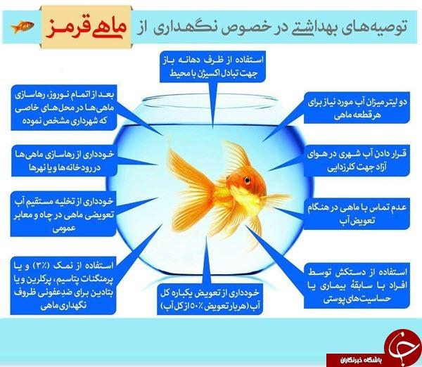 توصیه های بهداشتی در خصوص نگهداری از ماهی قرمز عید