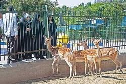 ۸ نوع حیوان وحشی از باغ وحش ارومیه فراری شدند