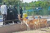 باشگاه خبرنگاران - ۸ نوع حیوان وحشی از باغ وحش ارومیه فراری شدند
