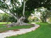 باشگاه خبرنگاران -ازدواج زن آمریکایی با یک درخت انجیر!+ تصاویر