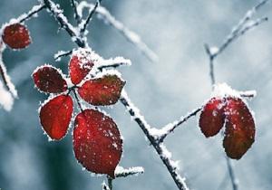 طبیعت زیبا و زمستانی