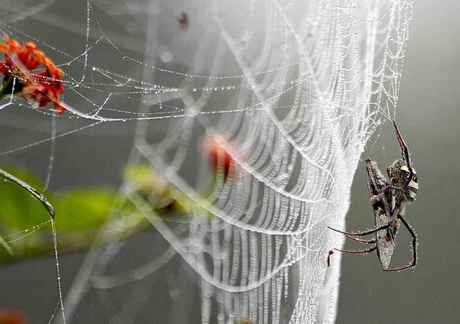 فیلمی جالب از تنیدن تار توسط عنکبوت