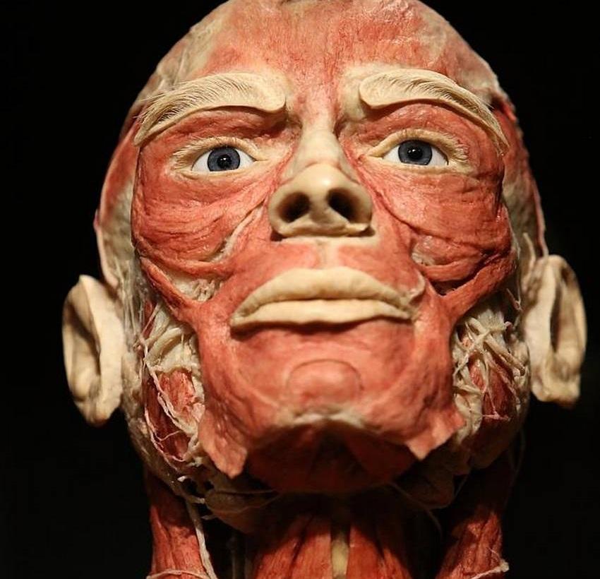 جهان بدن؛ مجوزی برای اکتشاف عمیق بدن انسان