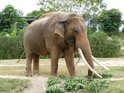 حمله مرگبار فیل به یک مرد + فیلم