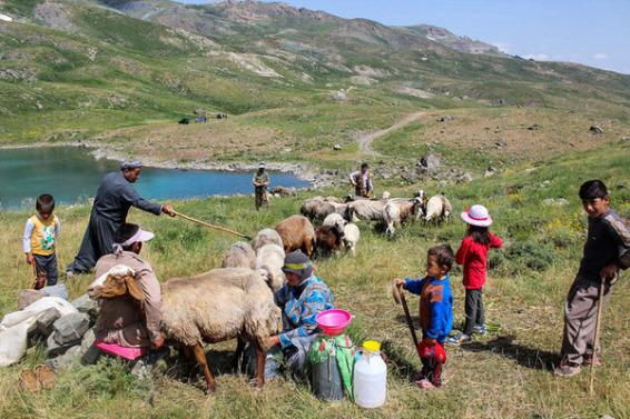 تولید سالانه ۱۵۰ هزار تن محصولات دامی توسط عشایر آذربایجانشرقی