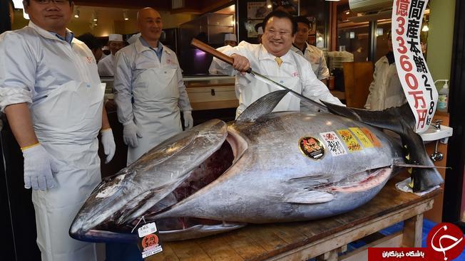 رکورد خرید گرانترین ماهی شکسته شد! + تصاویر//