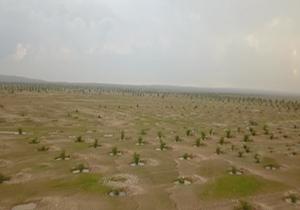 نهالستان مهران؛ سنگر مقابله با ریزگرد در غرب کشور + فیلم