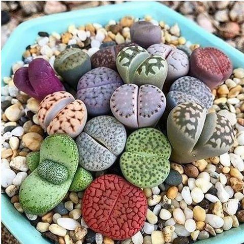 کدام سنگ ها در خانه  به گل تبدیل می شوند ؟