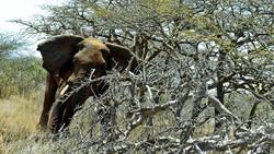 حمله مرگبار فیل به مرد جوان! + فیلم//