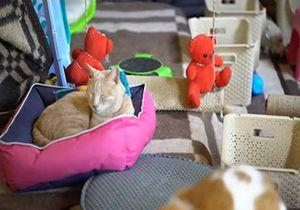 افتتاح هتل برای حیوانات در مصر + فیلم