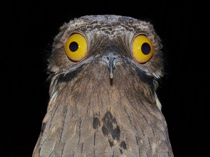 پرندههای عجیبی که شبیه آدم فضاییها هستند + تصاویر
