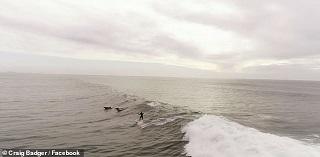 تصاویر زیبا از لحظات موج سواری بر روی امواج دریا +فیلم