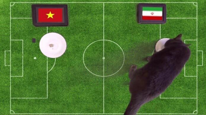 گربه پیشگو نتیجه دیدار تیمهای ملی فوتبال ایران - ویتنام را پیشبینی کرد