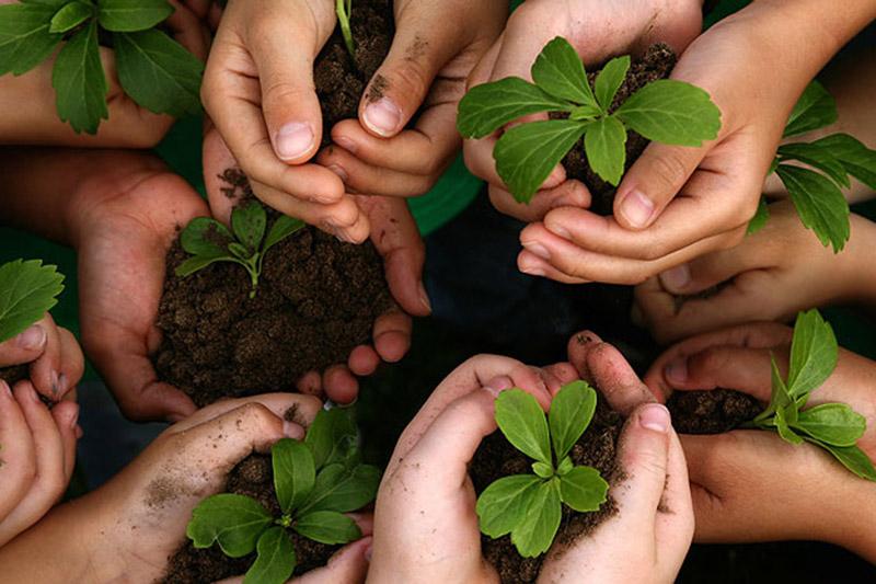 اعتبار ۴۰ میلیاردی صندوق توسعه کشاورزی استان کرمان