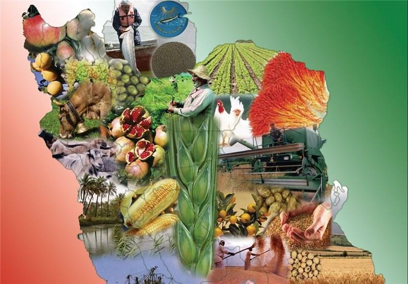 صنعت غذایی از مزرعه تا سفره مردم امتداد دارد/ شیرینی و شکلات در صدر تولیدات مواد غذایی