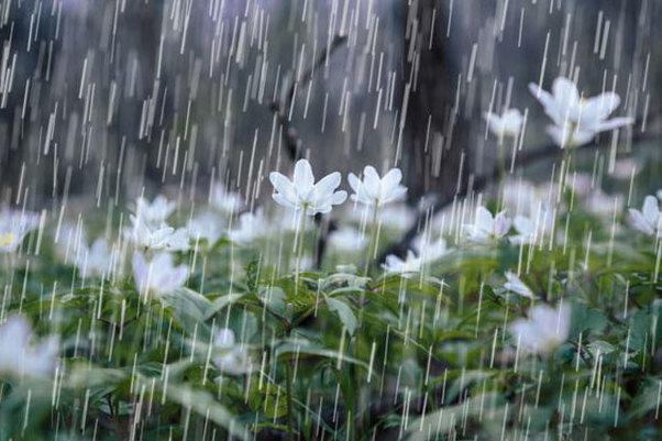 تداوم بارشها در کردستان تا اواخر فردا