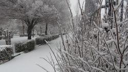 بارش برف و کولاک در زنجان