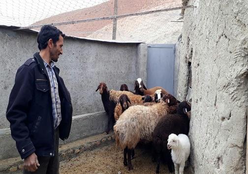 اجرای طرح روستای بدون بیکار در ۵ روستای دیگر خراسان جنوبی