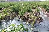باشگاه خبرنگاران -آخرین جزئیات از نشت نفت در مزارع شهر ری