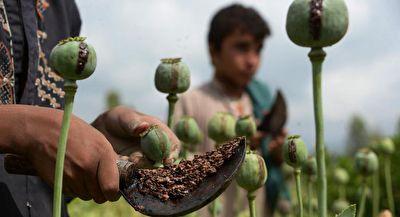 کارگاه تولید تریاک در افغانستان + فیلم