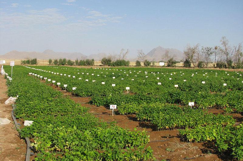 تجلیل از پژوهشگران برتر سال ۹۷ کشاورزی و منابع طبیعی استان مرکزی