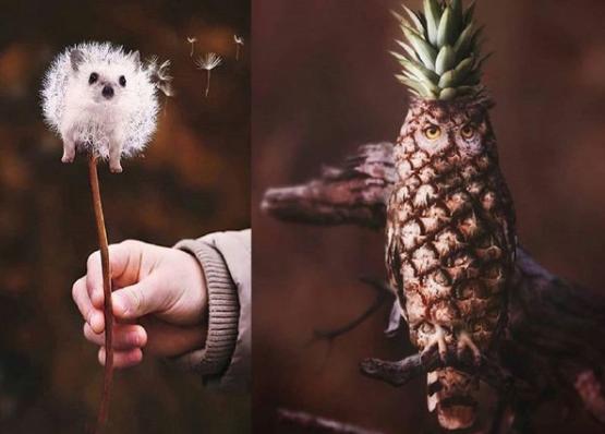 خلاقیت جالب یک عکاس در طراحی عکس حیوانات +عکس