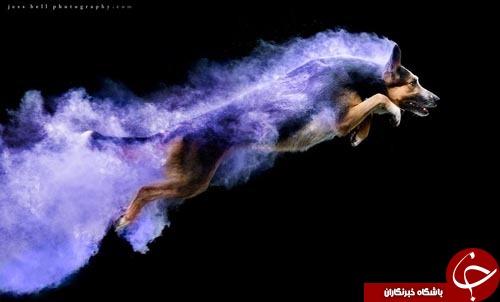 عکاسی شگفت انگیز در نتیجه خلاقیت با پودر های رنگی+تصاویر