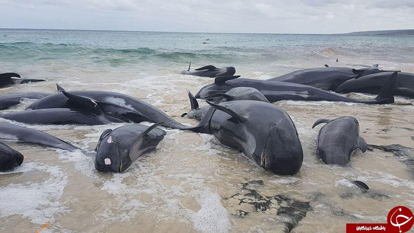 چرا برخی از حیوانات خودکشی میکنند؟! / بررسی دلایل خودکشی حیوانات از نمایی نزدیک!