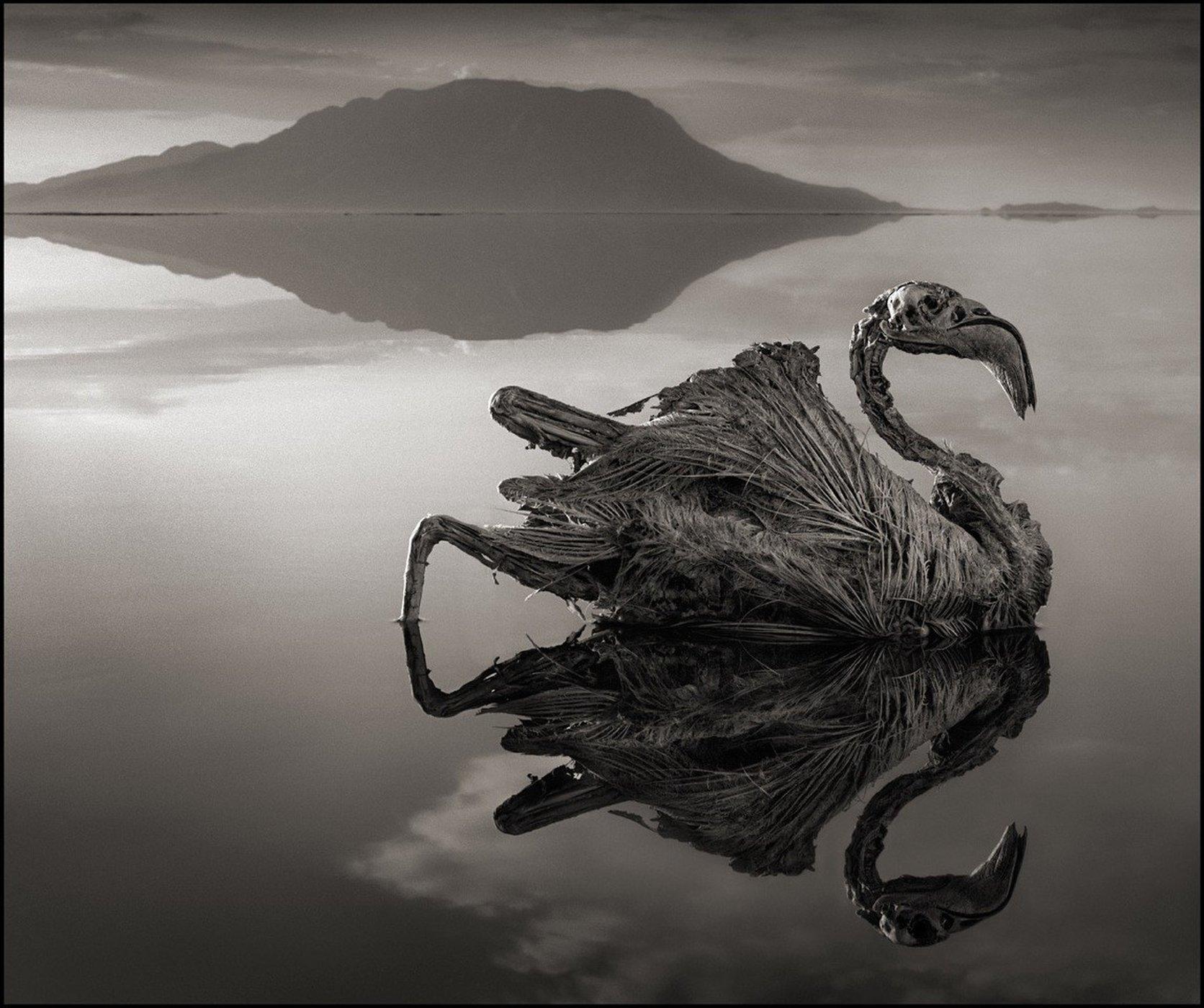 بیرحمترین دریاچه آفریقا تله ای برای حیوانات+ عکس