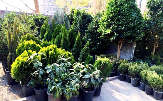 بهرهبرداری از پایانه گل و گیاه اسلامشهر تا پایان سال