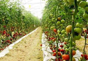 سطح کشت گلخانهای در فارس افزایش یافت