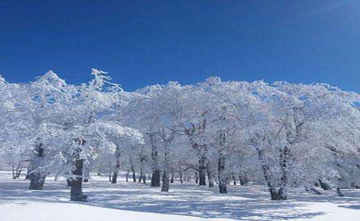 نمایی از طبیعت برفی در دشت شاد + تصاویر