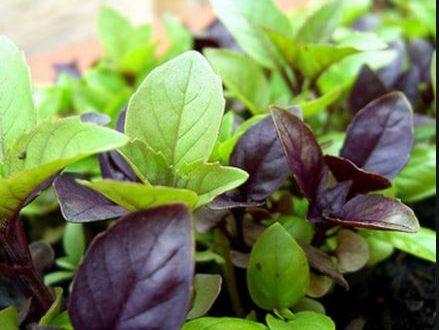 غذایی ساده در درمان سرماخوردگی کودک/قند دیابتیها باید چقدر باشد؟/گیاهی خوشبو برای ریشه کن کردن سنگ کلیه