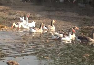مهاجرت پرندگان به شادگان و هور + فیلم