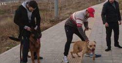 کابوس سگ در تعقیب دختربچه لواسانی + صوت