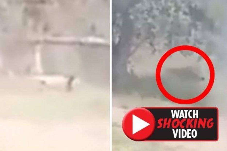 لحظه حمله مرگبار شیر به مرد جوان هندوستانی! +فیلم