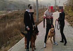 گفت و گو با پدر دختری که در لواسان مورد حمله سگها قرار گرفت + فیلم