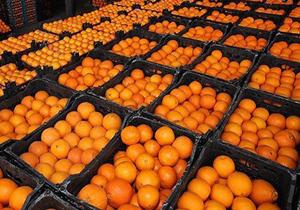 ذخیره سازی یکهزار و ۱۰۰ تن میوه شب عید