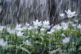 ورود سامانه بارشی در روز پنج شنبه به آسمان استان ایلام