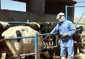 واکسیناسیون بیش از 5 هزار و 387 دام در استان همدان