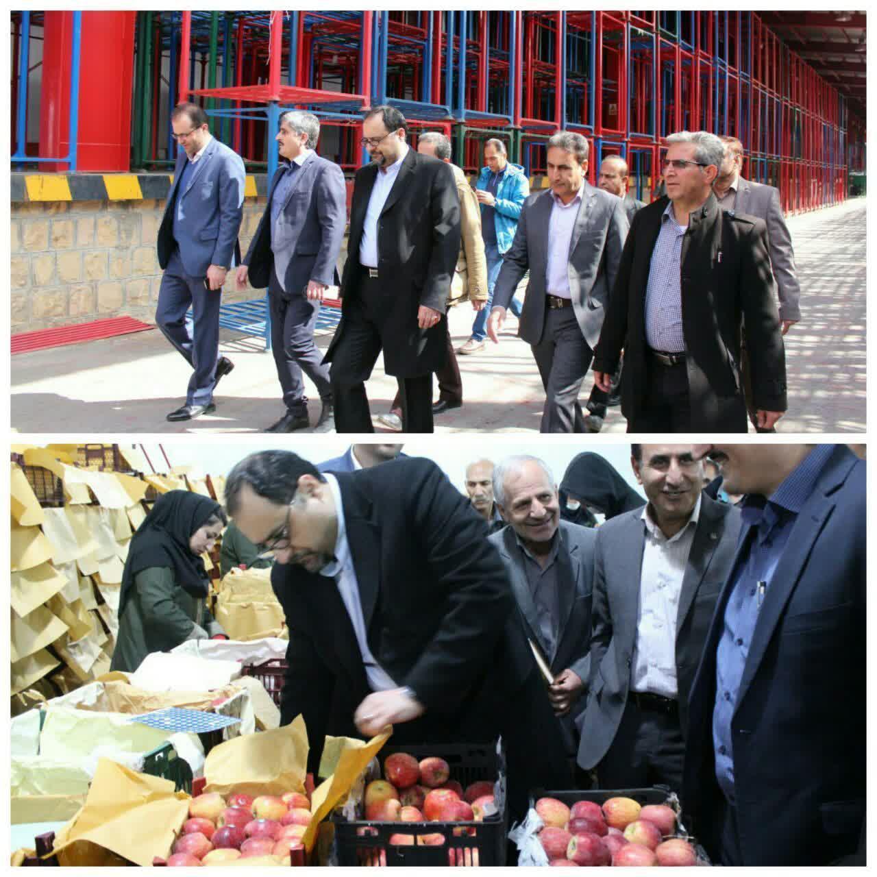 روابط عمومی//ذخیرهسازی ۲۳ هزار و ۷۶۰ تن سیب درختی برای تنظیم بازار شب عید