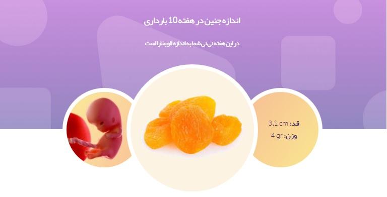 جنین در هفته دهم بارداری از خود صدا در می آورد+ تصاویر و علائم بارداری