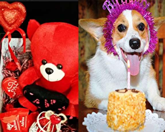 باشگاه خبرنگاران -از حضور خواننده معروف در تالار مجلل برای تولد سگ خانگی تا یک وانت بادکنک قلبی برای ابراز عشق/ رمزگشایی از اسلحه خطرناک غرب که دیده نمیشود!