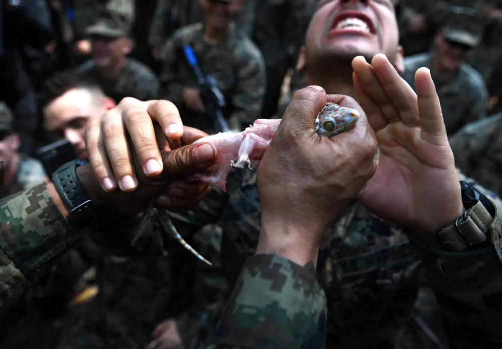 شیوههای تهوع آور آموزش سربازان آمریکایی: از نوشیدن خون مار کبرا تا خوردن عقرب و کرم خاکی! + تصاویر و فیلم