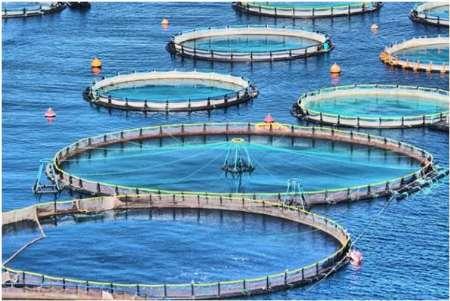 توسعه صنعت «پرورش ماهی در قفس» در استانهای ساحلی کشور