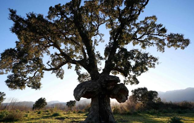 تصاویر روز: از وقوع سیل در کالیفرنیا تا انتخاب درخت سال فرانسه