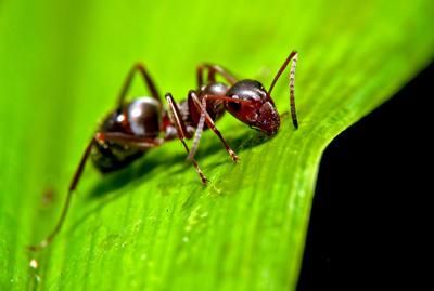 راهکارهایی کاربردی برای فراری دادن مورچهها از خاک گلدان